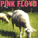 Dogs and Sheeps - Pink Floyd